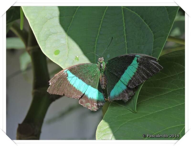 Au Paradis du Papillon à Sanguinet - 4/10