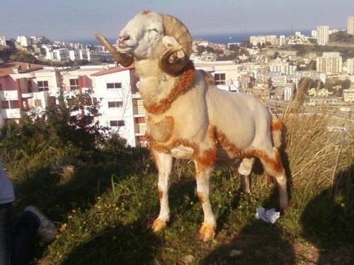Des images que tu ne trouves qu'au maroc