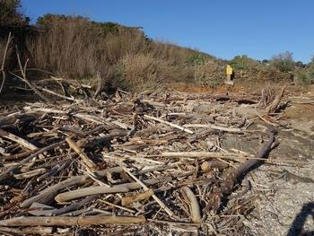 Une couche épaisse de bois couvre le littoral