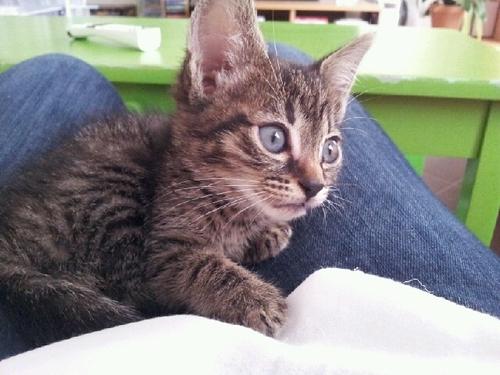 Un prénom pour un chaton ...