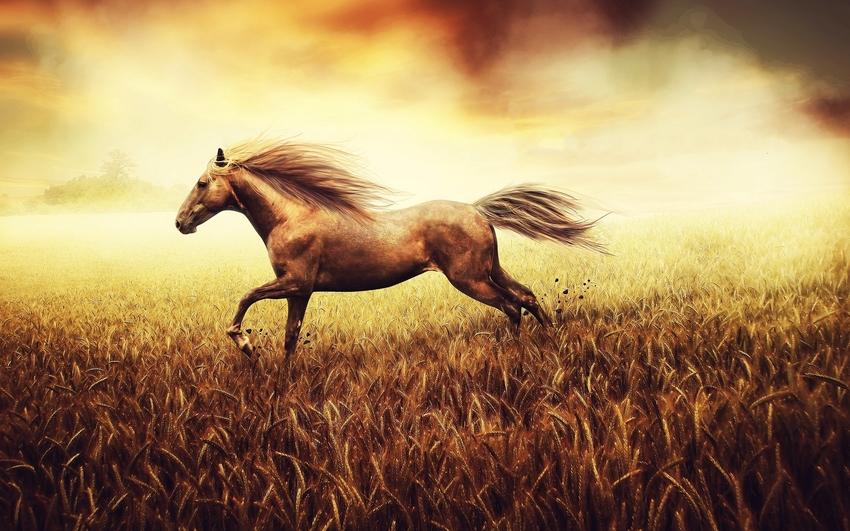 5 images de chevaux