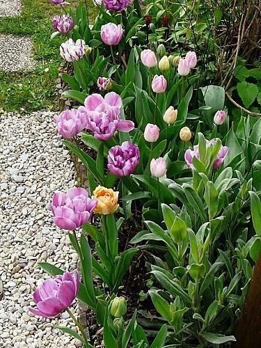 Tulipes-09-04-12-009.jpg