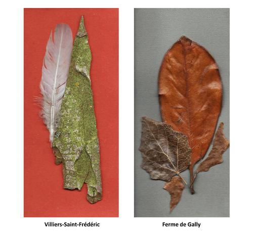2 nouvelles cartes végétales