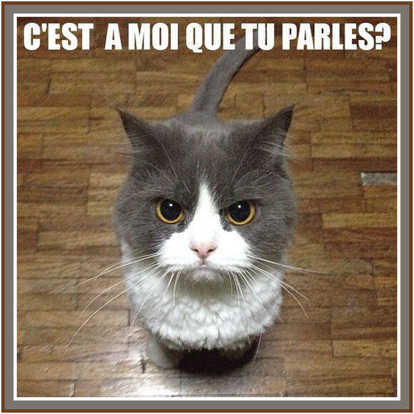 Pas commode le chaton !!!