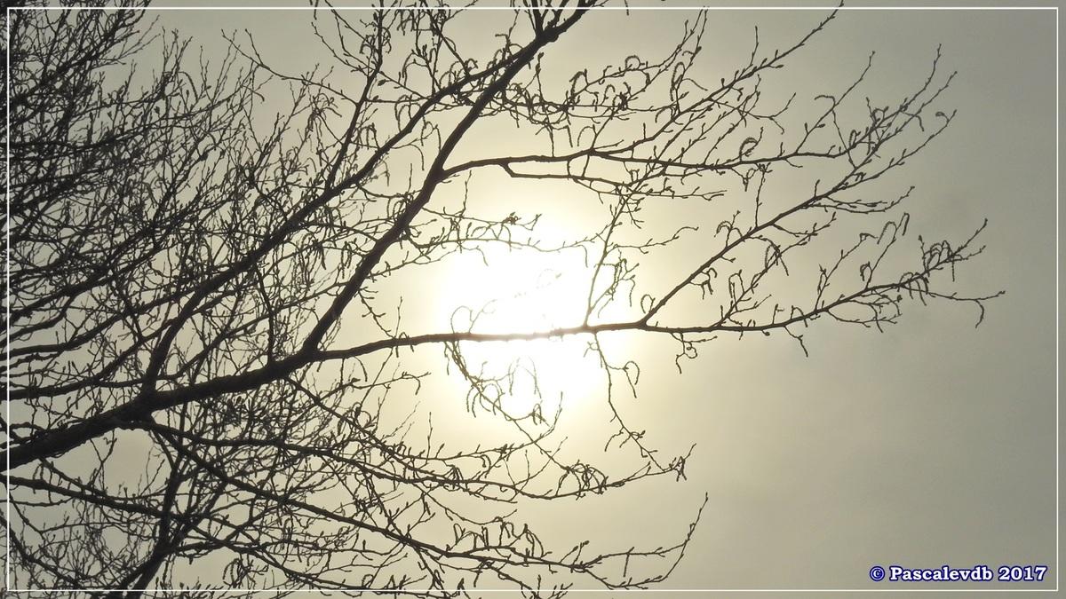 Balade à Gujan-Mestras en Mars 2017 - 7/12