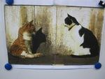 Exposé sur les chats