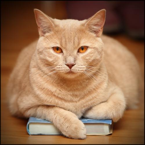 02 - Des chats et des livres suite