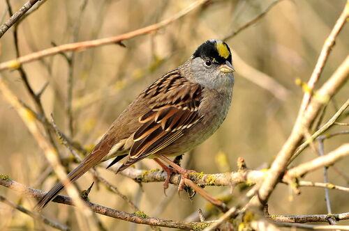 Une tache sur la tête d'un oiseau...