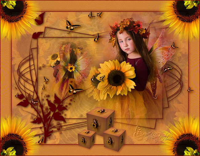 Fairy sunflower