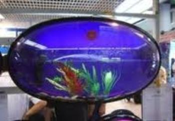 aquarium c