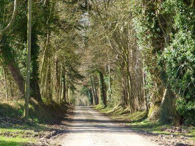 Le chemin de l'Abbesse