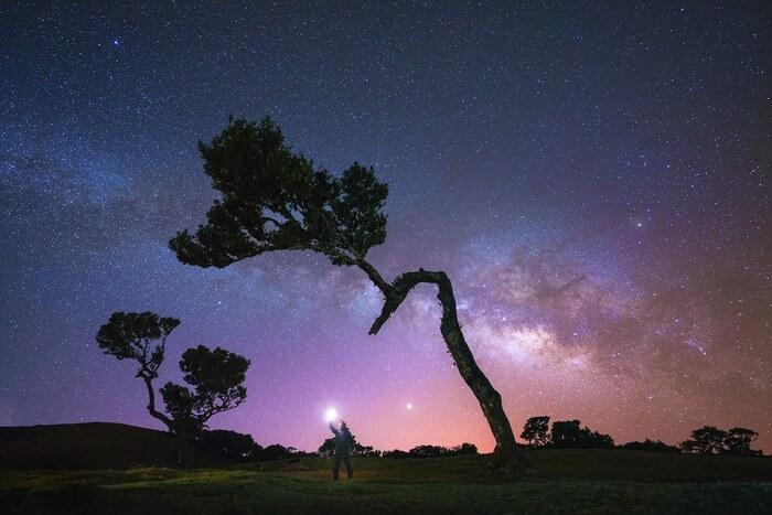 Photos enchanteresses de l'ancienne forêt de Fanal de Madère remplie d'arbres vieux de 500 ans