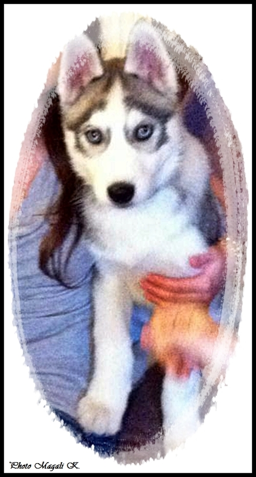 Damon (4 mois)