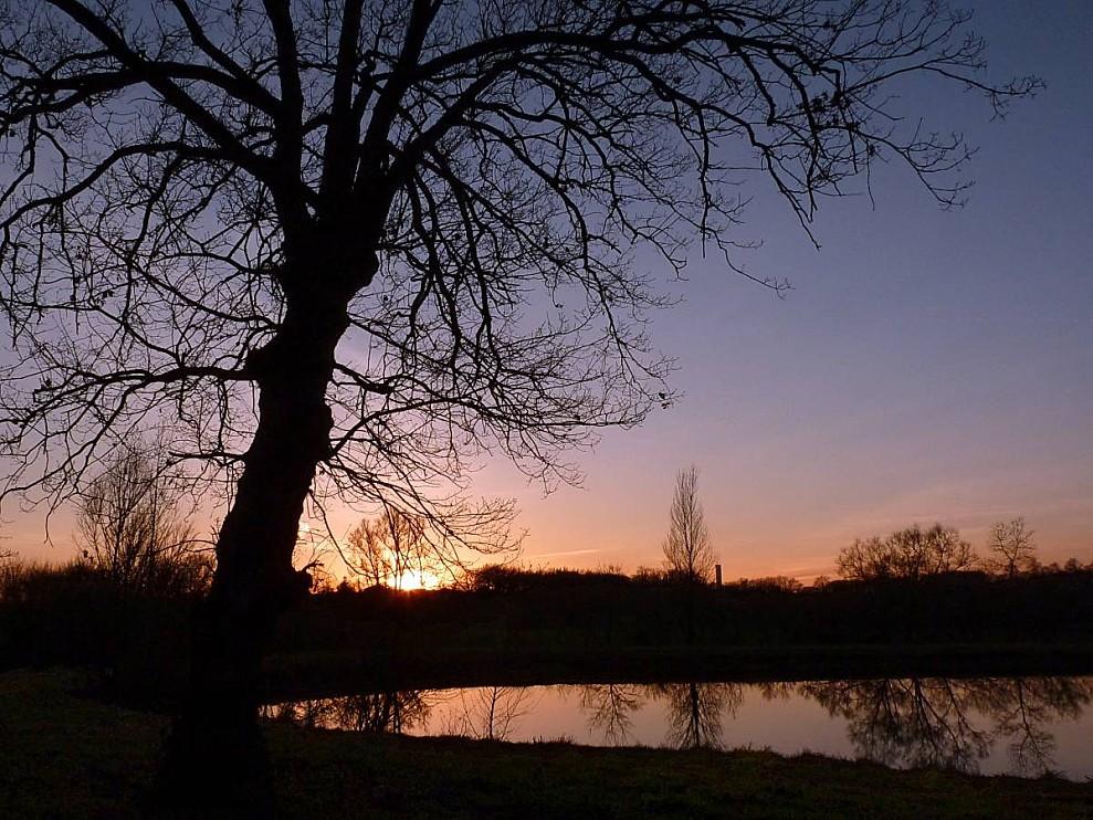coucher-soleil-arbre.jpg