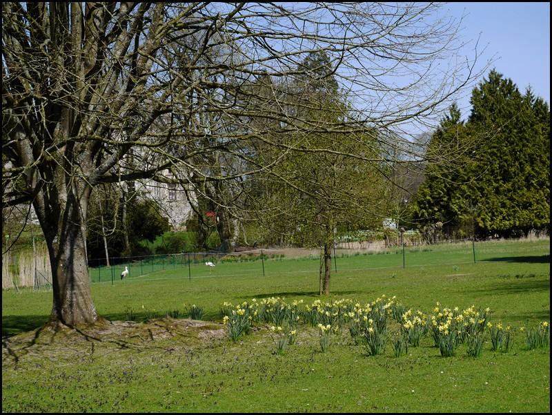 Parc de Clères -1ère visite de l'année
