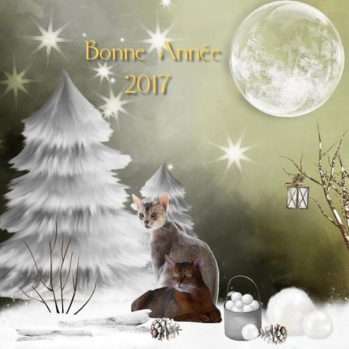 * * * Bonne année 2017 * * *