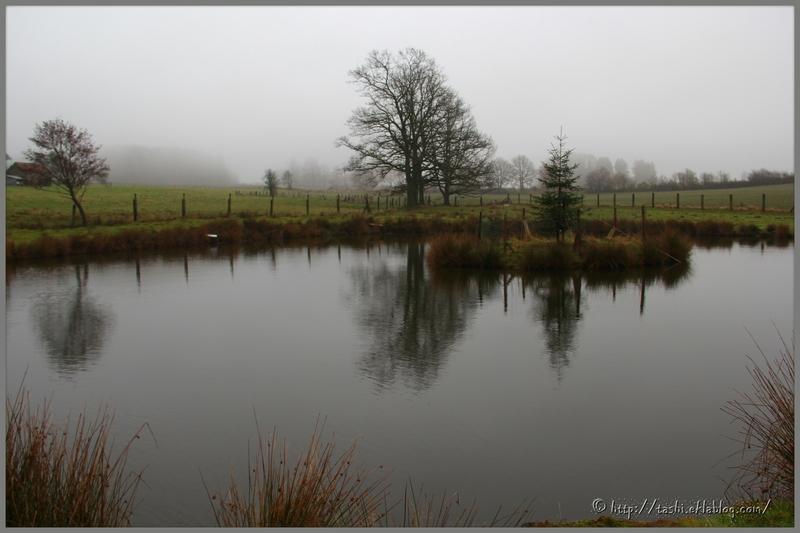 Ardennes belges en automne