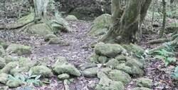 Balade en forêt du côté d'Entre-Deux