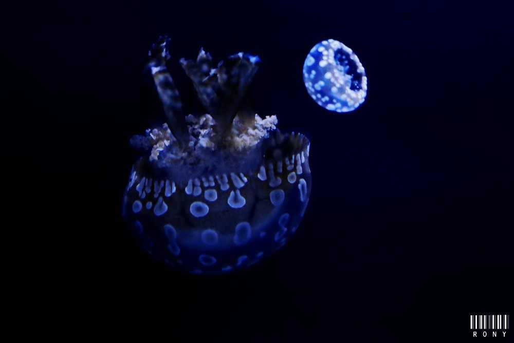 Le monde magique des Méduses part.2