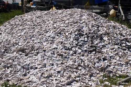 Un tas d'huîtres