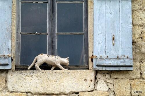 Des chats à la fenêtre, en couleurs