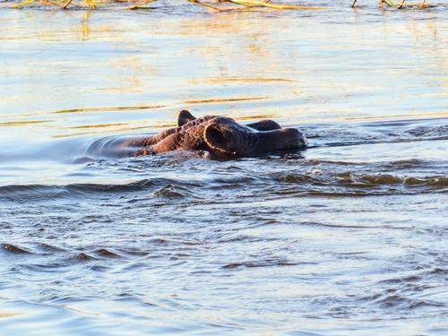 croisière sur le Zambèze; quelques rencontres sympas;
