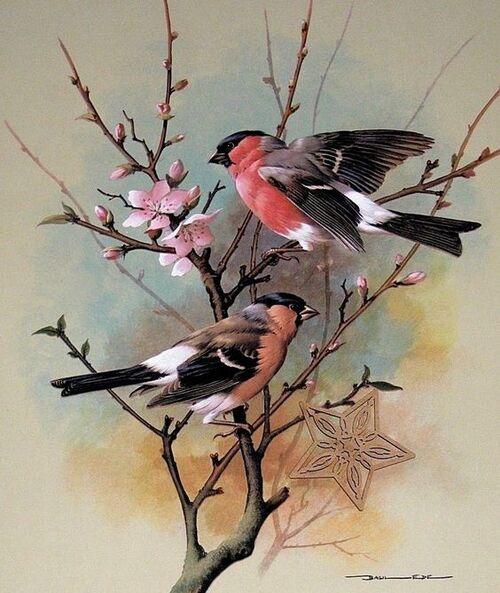 oiseaux en peinture (suite)