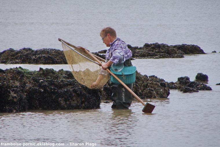 Pêche à la crevette à Tharon Plage