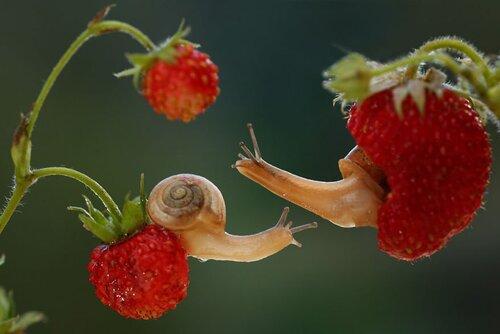 Escargot tout beau