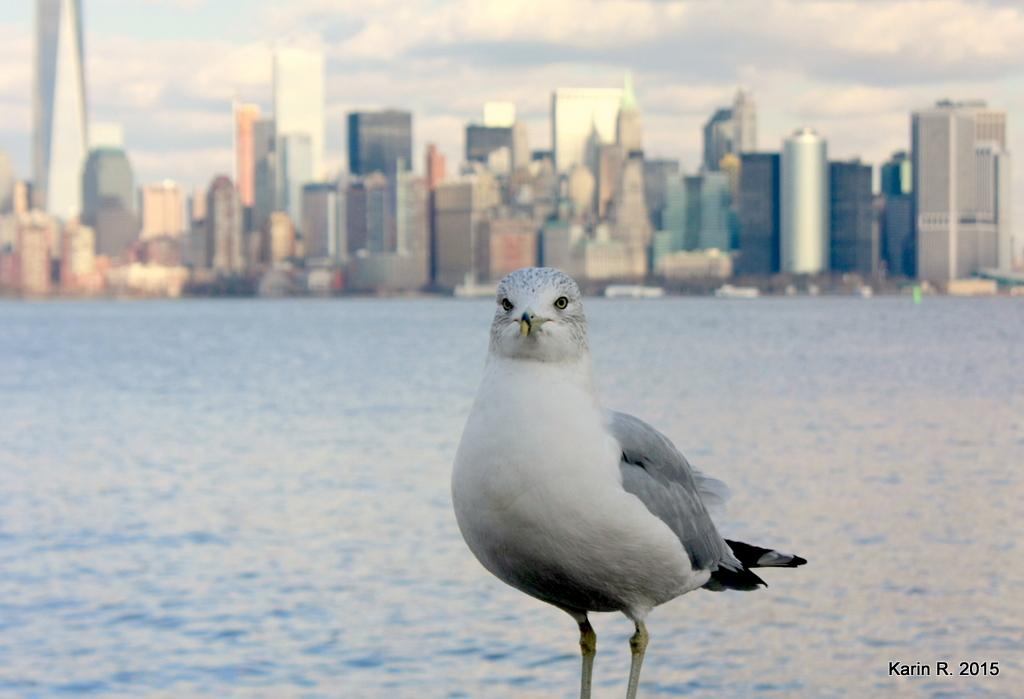 Le goéland de Manhattan