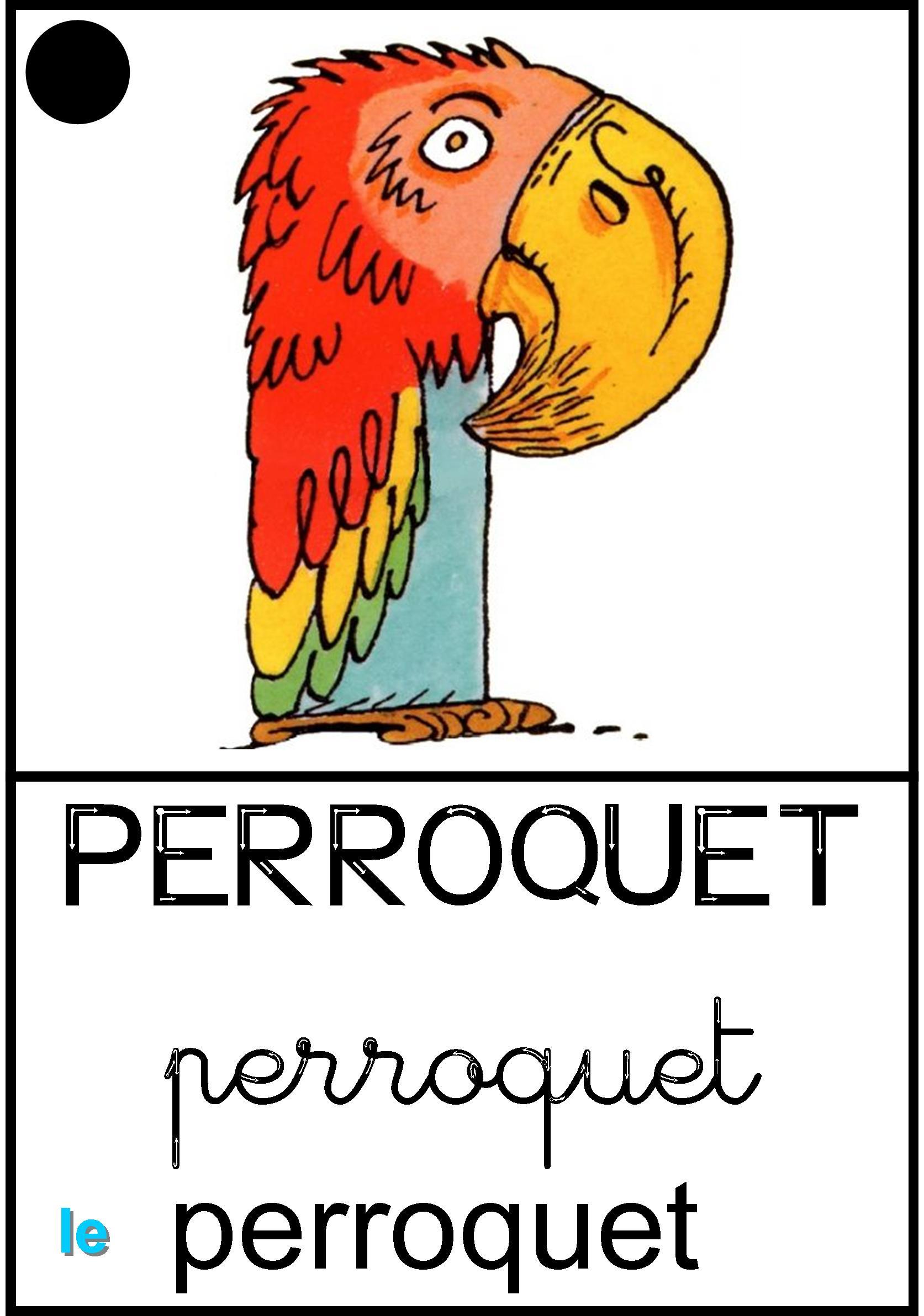 Affichage Le perroquet