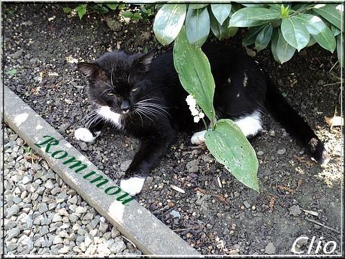Rominou repose au paradis des chats.