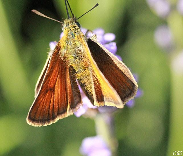 macros-insectes 2969