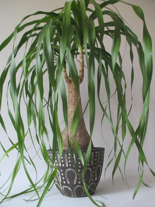 pot-pied d'éléphant-grès noir-céramique-michel cornut-atelier des lisières
