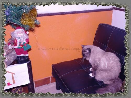 Noel et ses décorations....