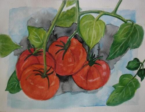 Tomate de Marmande