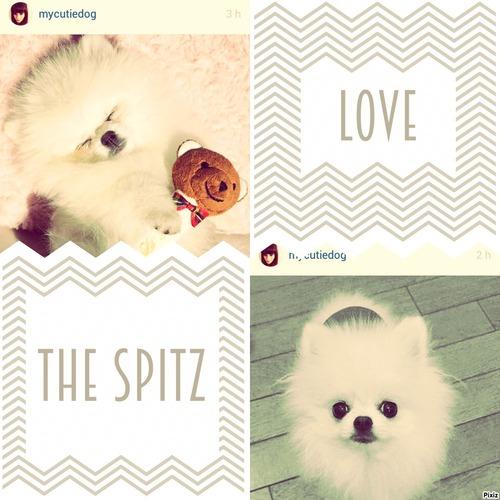 "Favoris | Instagram Mai 2015 "" Spitz """