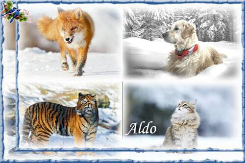 PPS Animaux en hiver