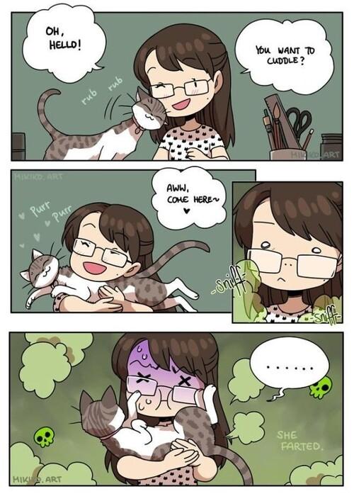 Ceux qui ont un chat comprendront