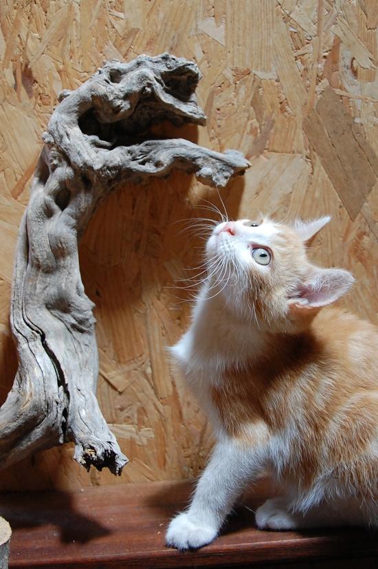 chaton19juilletd