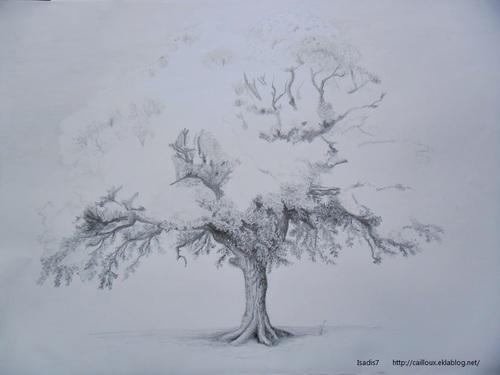 Les racines s'allongent, les feuilles poussent...