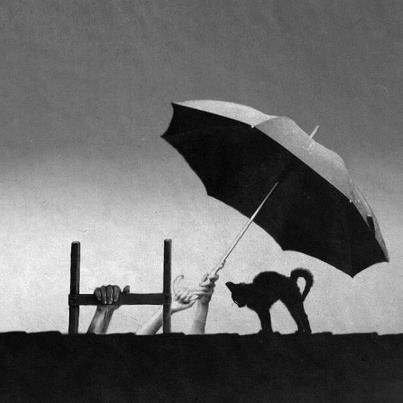 24 - Les animaux, le  parapluie et la pluie