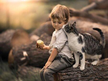 Cette #maman photographie la relation entre son fils et son #chat, le résultat est adorable