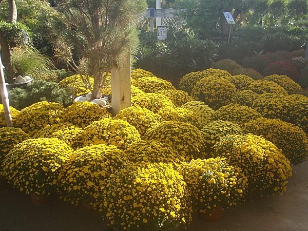 fleurs d'automne 015