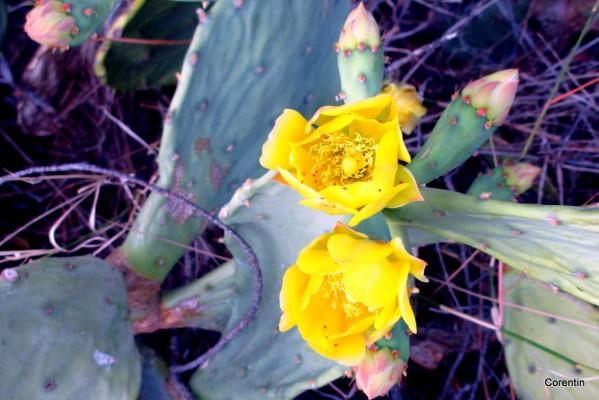 dj02---fleurs-jaunes.JPG