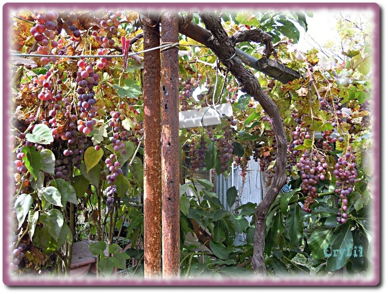Au jardin en automne