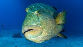 L'art d'élever des poissons ou élever des poissons est un art ?