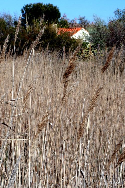 Promenade au bord de l'étang au Barcarès