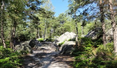 Rochers de Fontainebleau  77