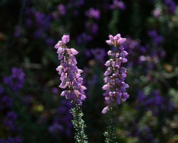 Fleurs-13-1445.jpg